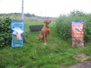 Apportprøvens beste hund Terra 11 år 029