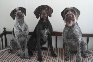 Paxa, Dee-Dee og Fresh